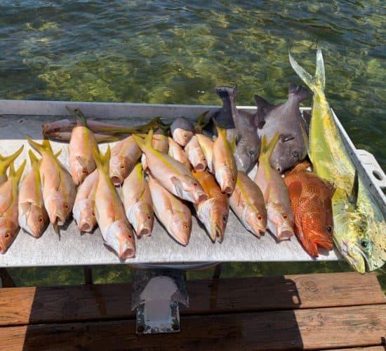 Reef Fishing 1